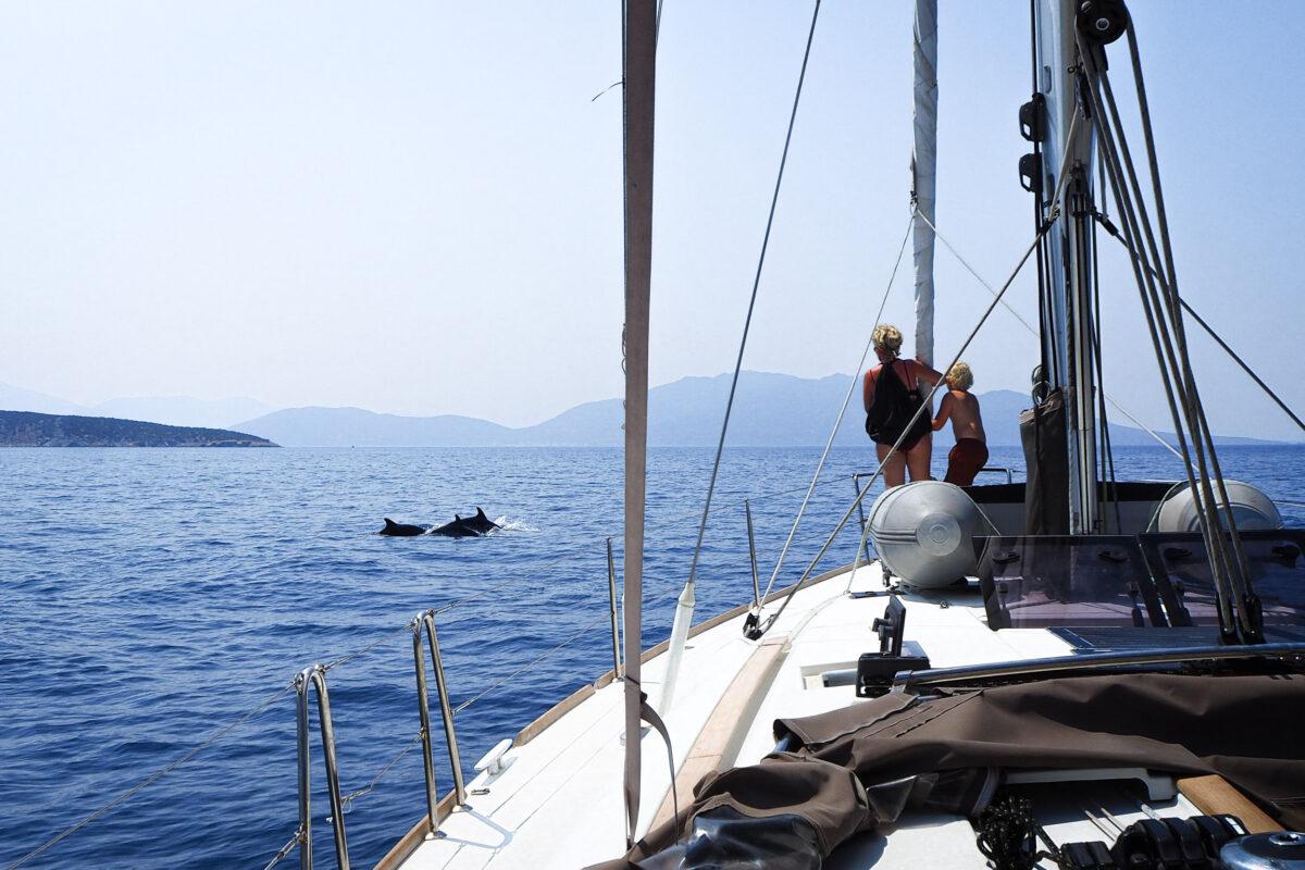 Dolfijnen spotten vanaf het voordek
