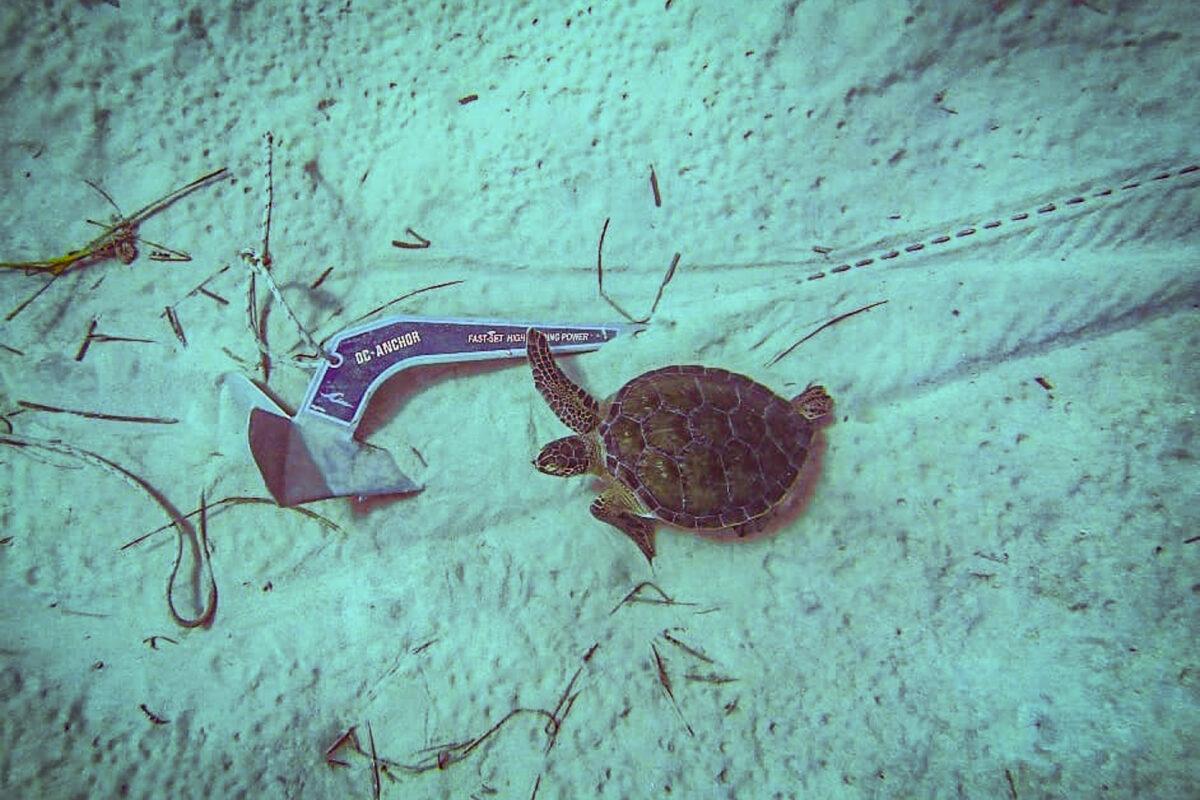 Anker en schildpad